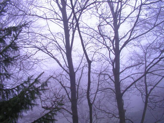 Landschaft, Durchblick, Fotografie, Nebel