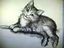 Tiere, Katze, Zeichnungen