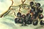 Stillleben, Trauben, Malerei, Früchte