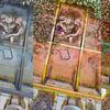 illustration in progress - illustration, progress, nootoon.art, contemporary, illustration, illustrator, germany, nootoon.com, hyperreal, stories, true, rose
