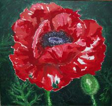 Stillleben, Blüte, Rot, Blumen, Malerei, Mohn