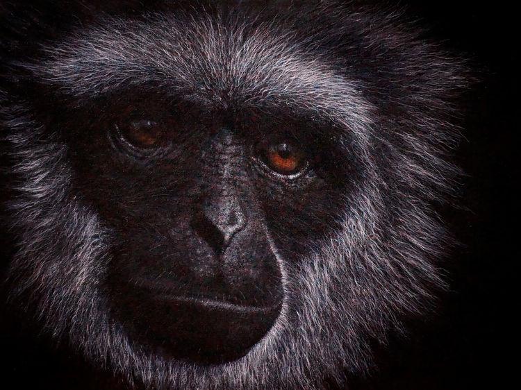 Realismus, Java gibbon, Augen, Affe, Gemälde, Tierwelt