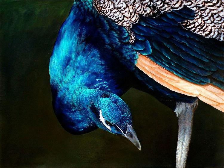 Realismus, Blau, Gemälde, Tierwelt, Tiere, Pfau