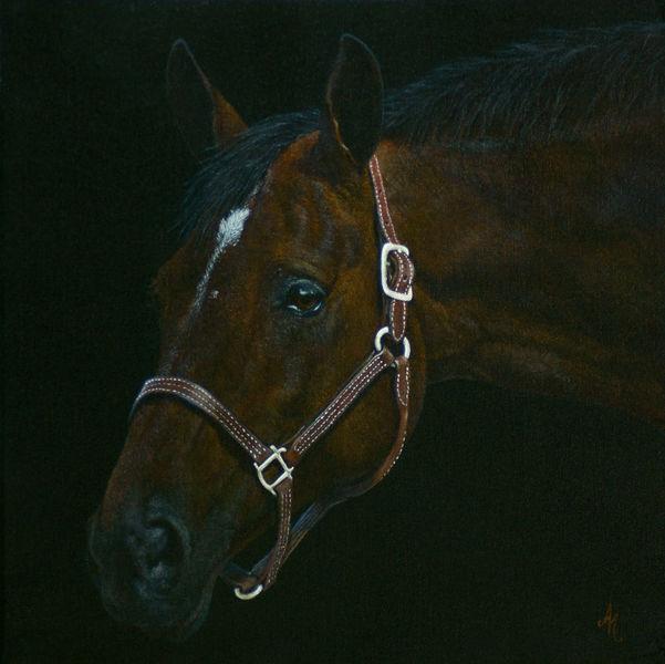 Pferde, Traum, Gemälde, Tierwelt, Hübsche, Augen