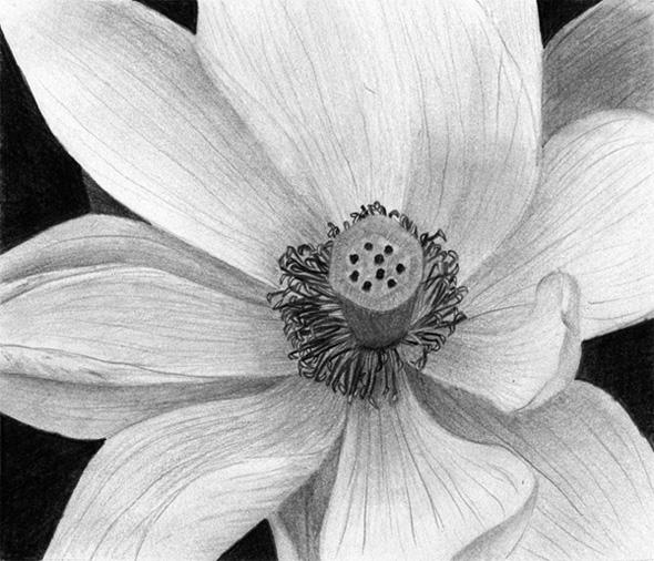 www.sexgeschichten.de lotus zeichnung