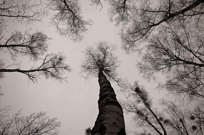 Digital, Abstrakt, Digitale kunst, Wald,