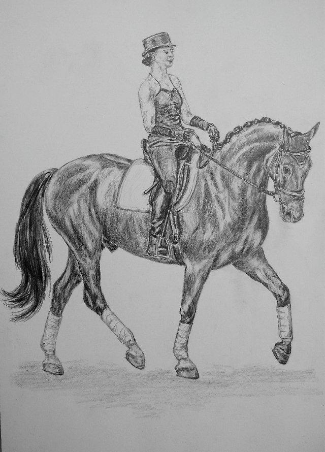 Anja Baileys Pferde Zeichnung Zeichnungen Von Sunny61 Bei Kunstnet