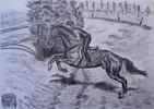 Pferde, Zeichnung, Zeichnungen