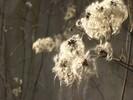 Flaum, Licht, Baum, Faser
