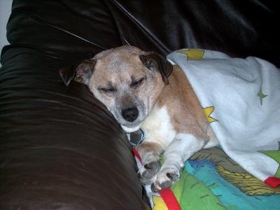 Hund, Traum, Schlaf, Pinnwand, Süße