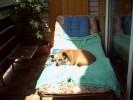 Hund, Sonne, Pinnwand