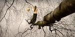Baum, Frau, Pfad, Äste