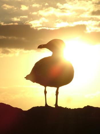 Sonnenuntergang, Gelb, Kanaren, Landschaft, Vogel, Möwe