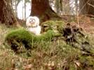 Natur, Mossfankurve, Hund, Endeckungsreise