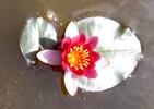 Flora, Fotografie, Stillleben,