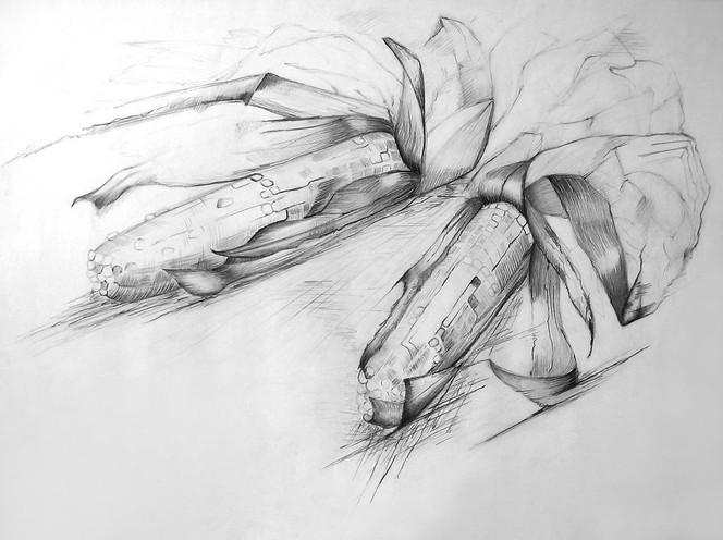 Bleistiftzeichnung, Stillleben, Pflanzen, Mais, Zeichnung, Zeichnungen