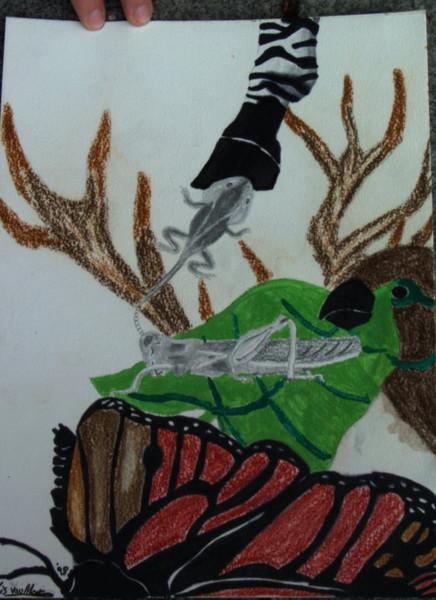 Frosch, Blätter, Zebra, Tiere, Malerei, Heuschrecke