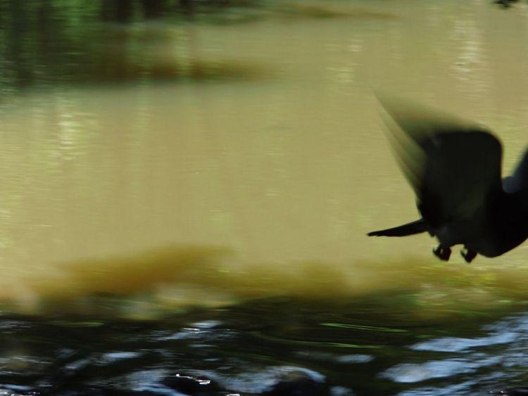 Spiegelung, Licht, Wasserfall, Schatten, Flügelschlag, Augenblick