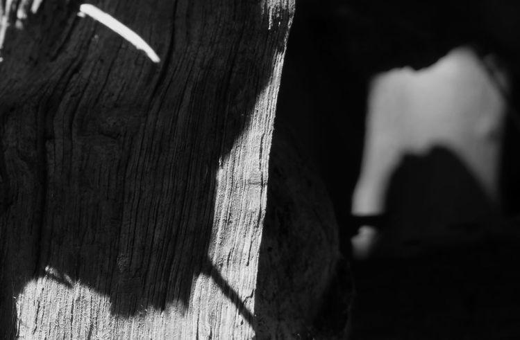 Licht, Schatten, Begegnung, Waldtier, Fotografie, Wald