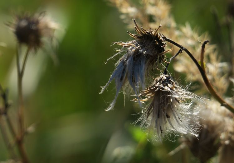 Licht, Blüte, Unterwegs, Herbst, Fotografie