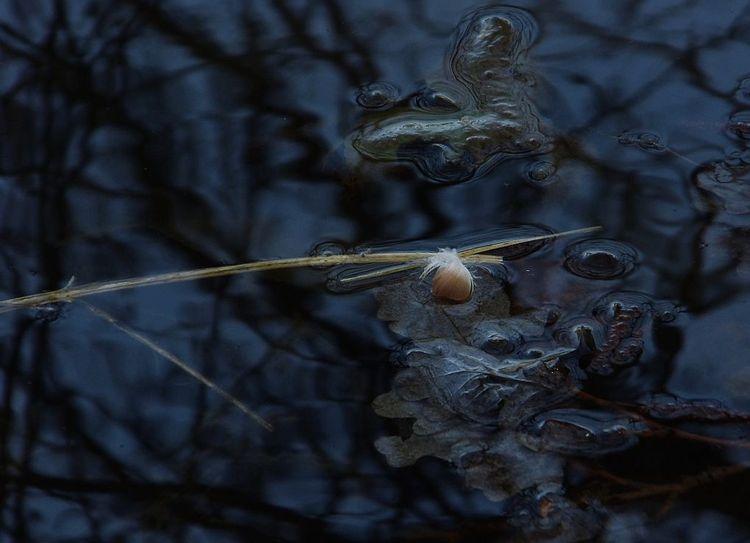Blätter, Feder, See, Spiegelung, Fotografie, Konstellation