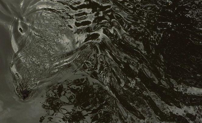 Welle, Wasser, Entlein, Fotografie