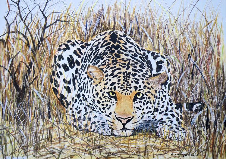Natur, Steppe, Mimikry, Katze, Leopard, Tiere