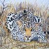 Katze, Tiere, Leopard, Natur