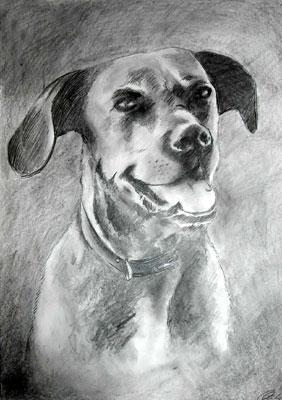 Hund, Portrait, Zeichnung, Zeichnungen, Tiere, Freundlich