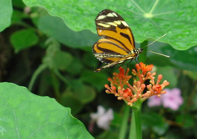 Bunt, Natur, Blüte, Schmetterling, Blätter, Fotografie
