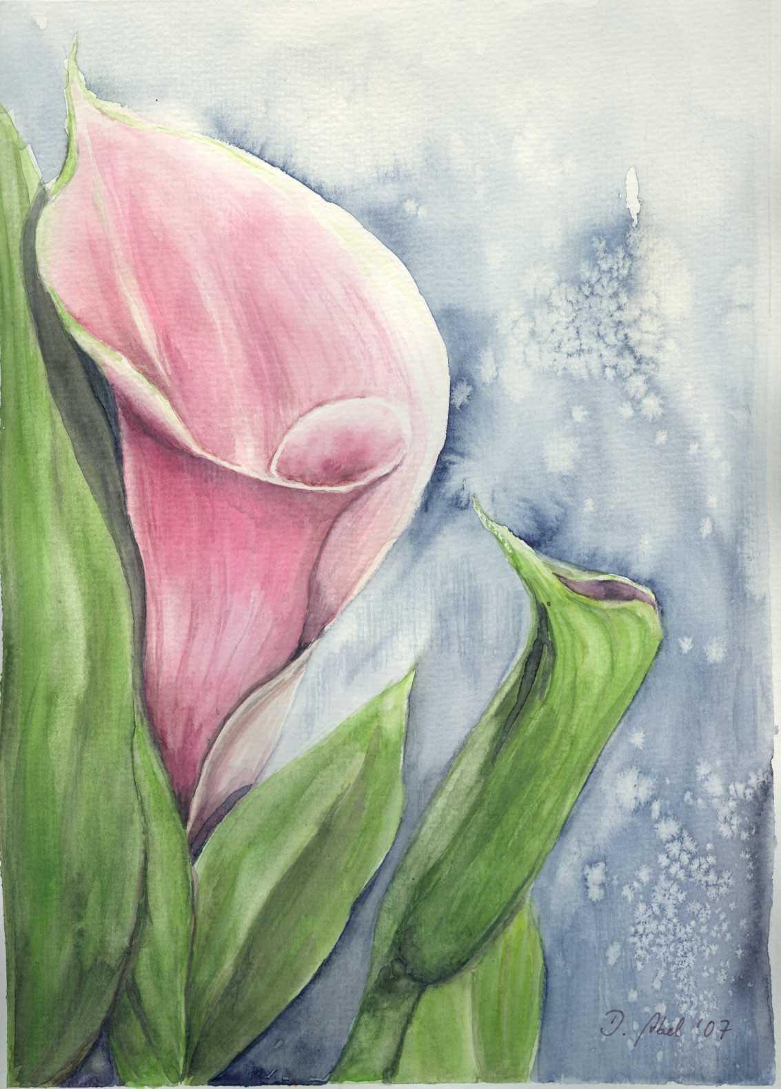 bild calla blume malerei pflanzen von doris abel bei. Black Bedroom Furniture Sets. Home Design Ideas
