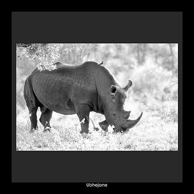 Nashorn, Rhein, Afrika, Tiere, Gesicht, Tierwelt