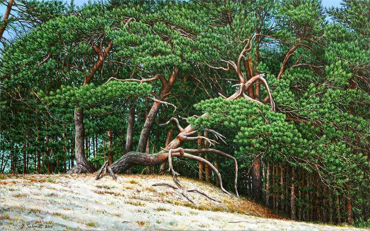 Ölmalerei, Gras, Sanddünen, Kreativ, Wald, Grün