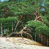 Ölmalerei, Gras, Kreativ, Wald