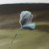 Mohn, Ölmalerei, Blumen, Blüte