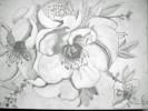 Bleistiftzeichnung, Landschaft, Blüte, Zeichnung