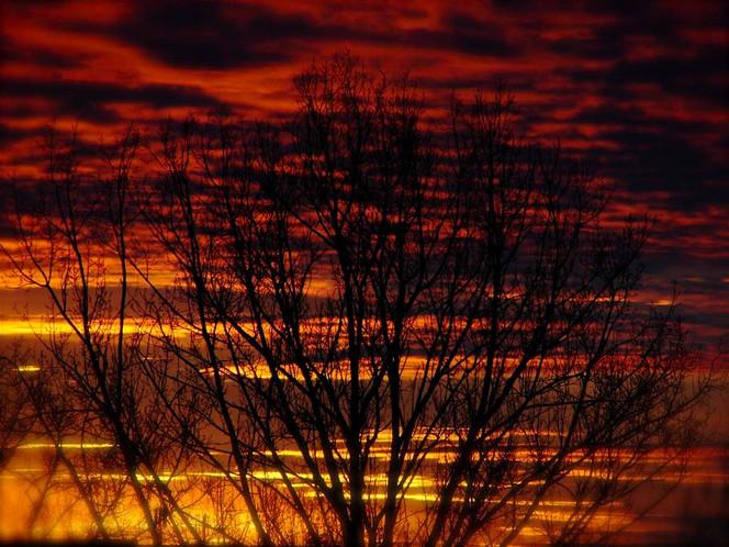 Landschaft, Wolken, Baum, Letzteslicht, Rot, Feuer