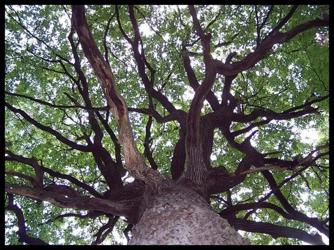 Stamm, Natur, Pflanzen, Rinde, Baum, Eichen