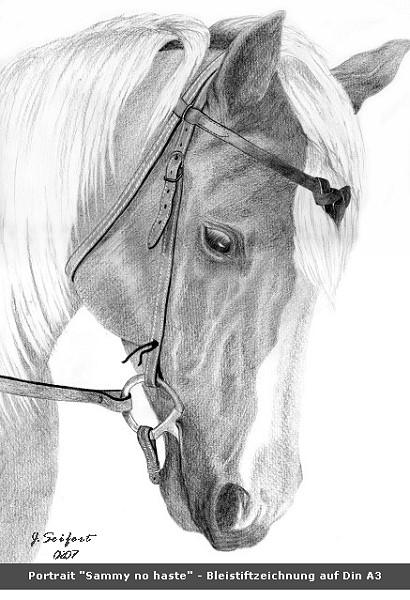 Pferde, Western, Pony, Haflinger, Zeichnungen, Tiere