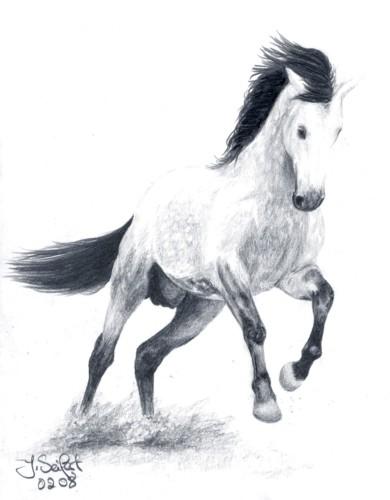 Pferde, Hengst, Andalusier, Zeichnungen, Tiere