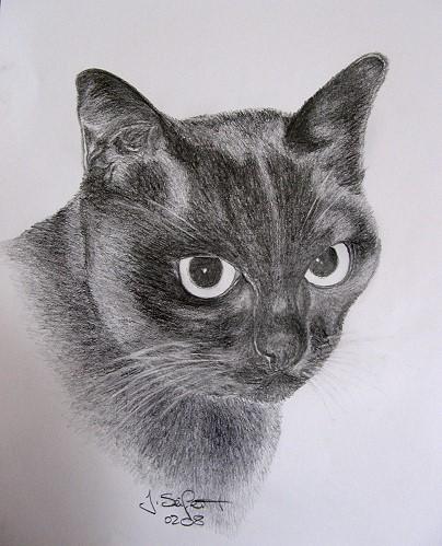 Portrait, Mieze, Katze, Zeichnung, Zeichnungen, Tiere