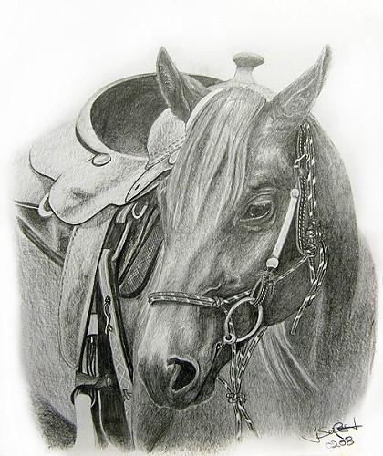 Pferde, Westernsattel, Quarterhorse, Viertel, Western, Hengst
