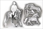 Springen, Haflinger, Portrait, Pony