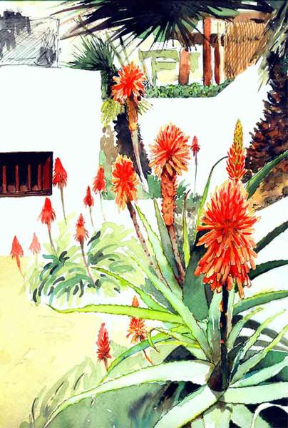 Aloe, Blumen, Aquarellmalerei, Lanzarote, Farben, Malerei