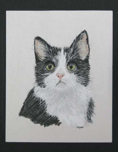 Kreide, Tiere, Portrait, Natur, Katze, Pastellmalerei