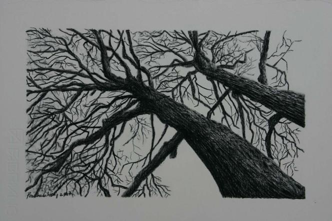 Schwarz, Natur, Baum, Viktringer kreis, Kohlezeichnung, Zeichnung