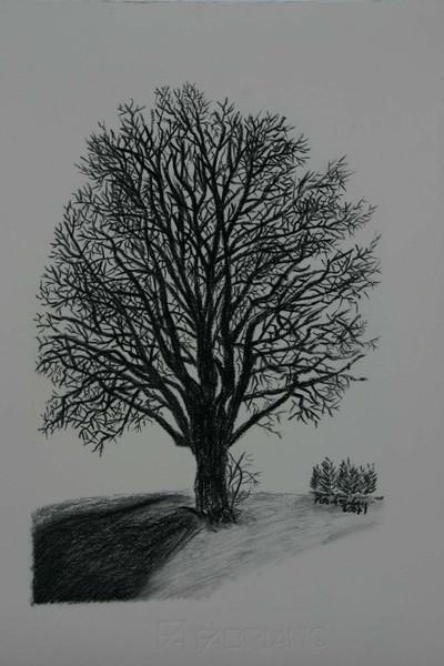 Kohlezeichnung, Natur, Viktringer kreis, Winter, Zeichnung, Baum