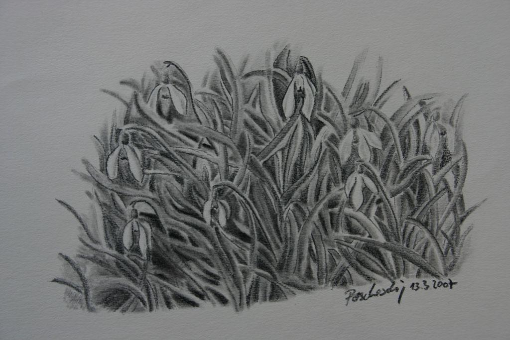 Schneeglöckchen Blumen Kohlezeichnung Viktringer Künstlerkreis