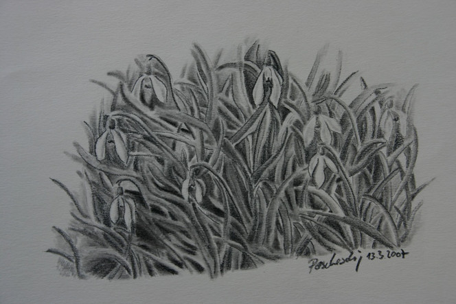 Blumen, Kohlezeichnung, Viktringer künstlerkreis, Schneeglöckchen, Winter, Zeichnung