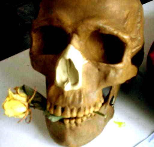 Rose, Schädel, Tod, Fotografie, Pflanzen